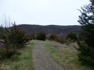 Applachian Trail - Wawayanda Mountain