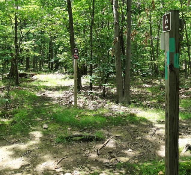 trail B