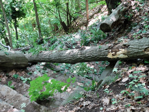 fallen tree on Forest View trail
