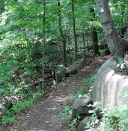 Forest View trail