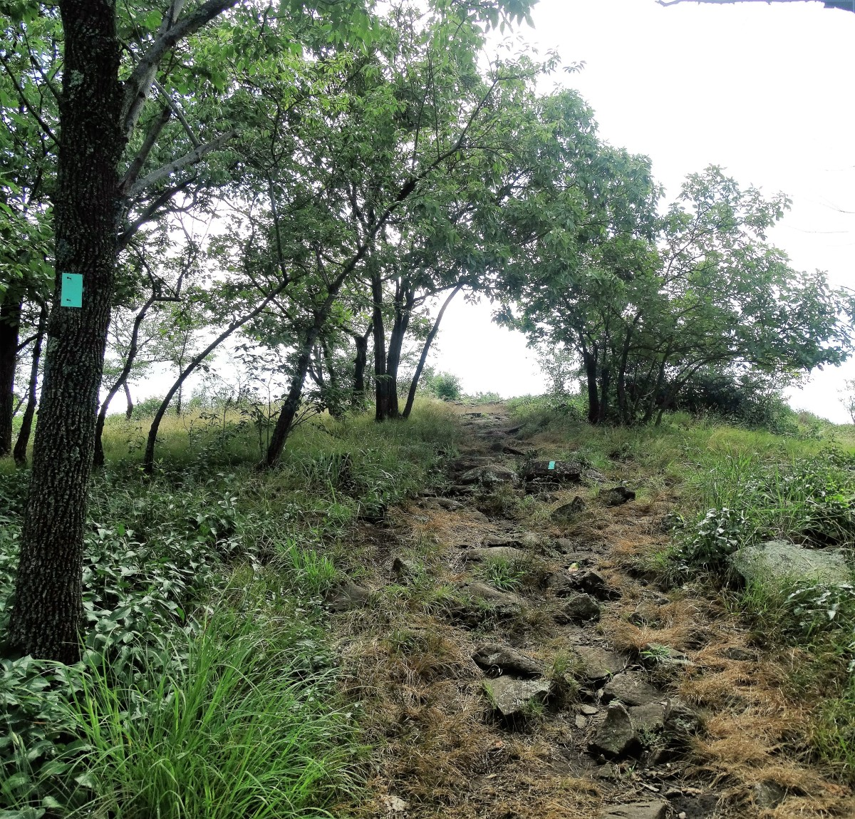 The Long Path at the summit of Hook Mountain