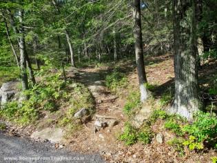 Fox Path