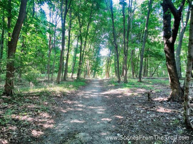 blue blazed shady woods road