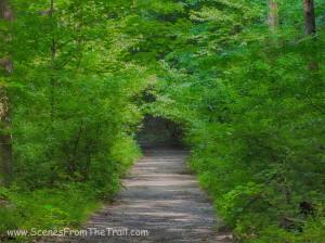 blue trail heading north