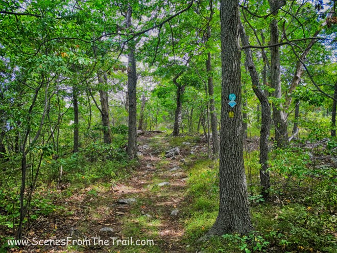 The Jessup Trail