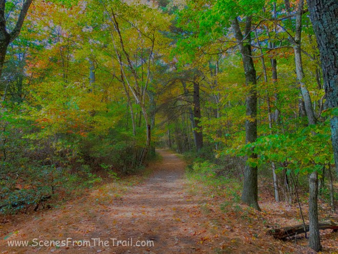main trail - Bear Hill Nature Preserve