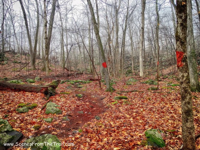 red-blazed trail