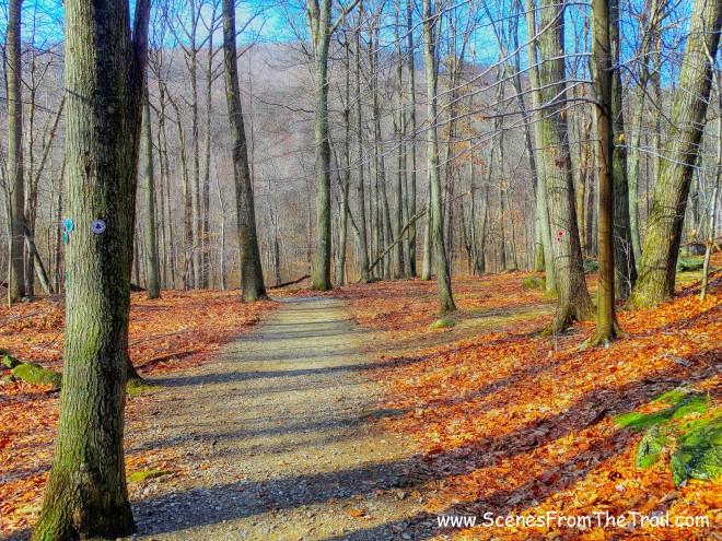 White-blazed trail