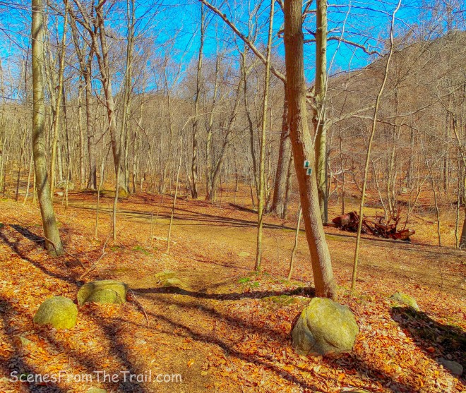 Halifax Trail - Havemeyer Hollow