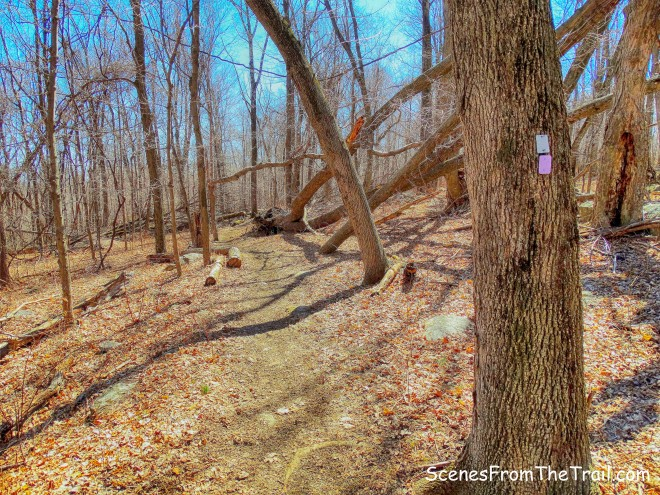 joint Havemeyer Trail and White Trail