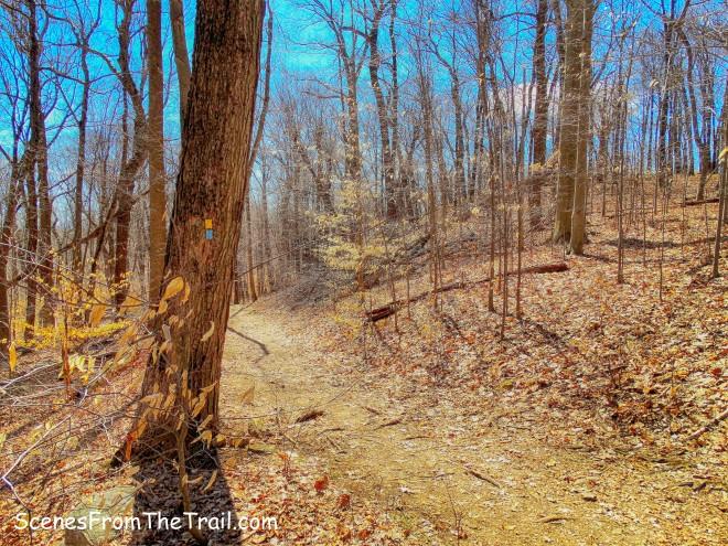 Yellow-blazed Vista Loop Trail/Blue-blazed Ridge Loop Trail