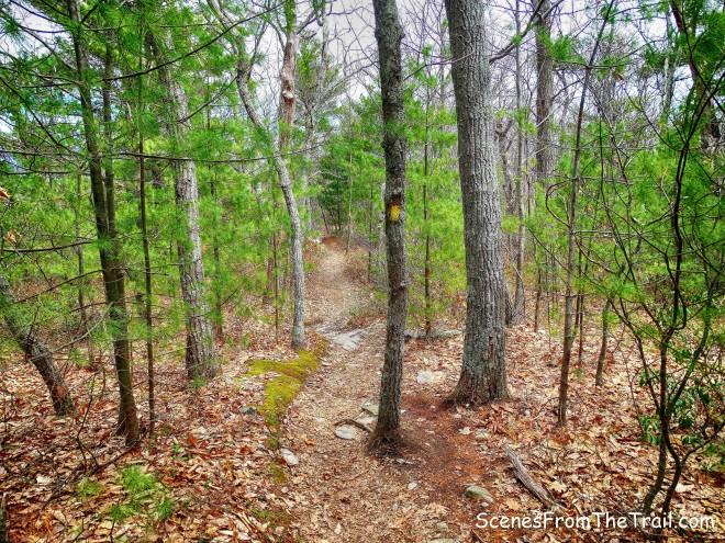 yellow-blazed trail