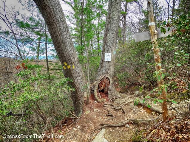blue-blazed Northeast Trail