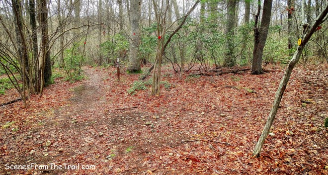 Catfish Loop Trail crosses a woods road marked with yellow blazes