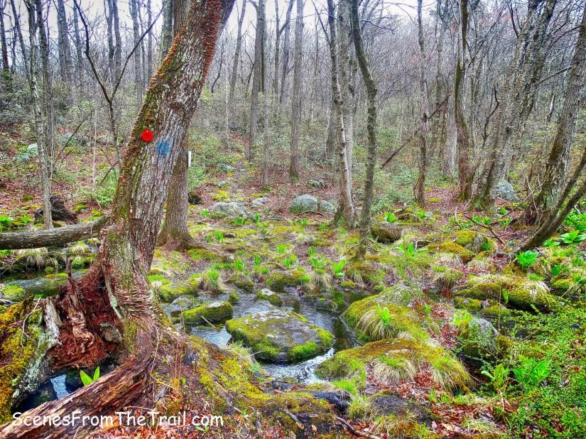Catfish Loop Trail – Fahnestock StatePark