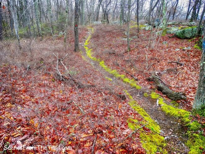 Catfish Loop Trail