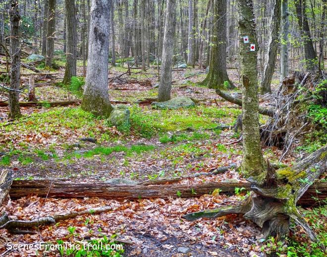 red-on-white-blazed Ramapo-Dunderberg (R-D) Trail