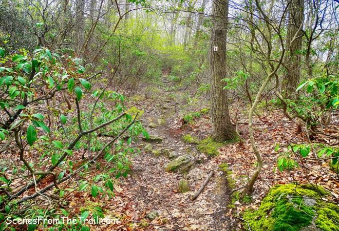 The R-D Trail
