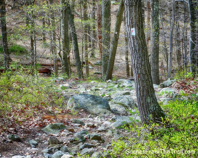 """red-""""F""""-on-white blazed Fawn Trail"""