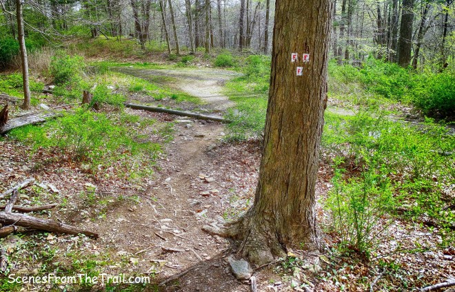 end of Fawn Trail