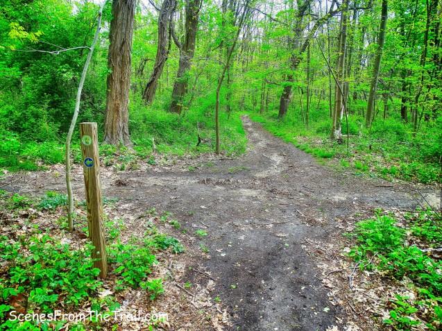 woods roads