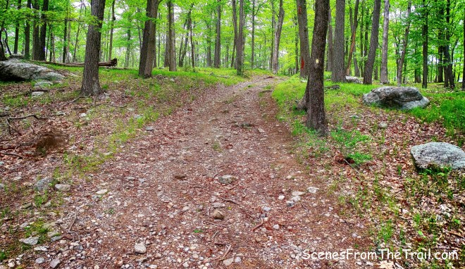 joint Dunning Trail/Island Pond Road