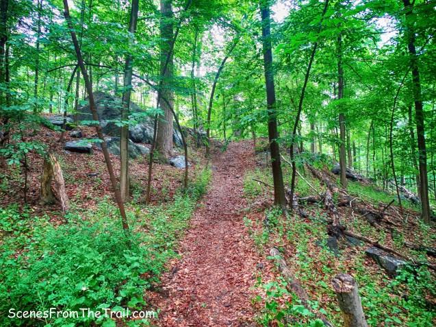 ML Trail