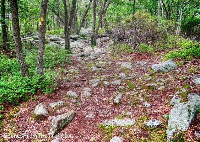 Suffern-Bear Mountain Trail/Breakneck Mountain Trail junction