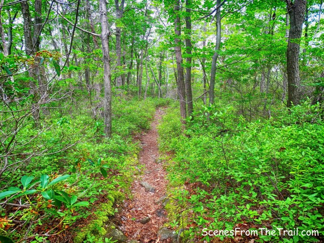 unmarked trail to Breakneck Pond