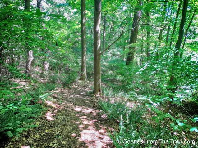 Sawkill Trail