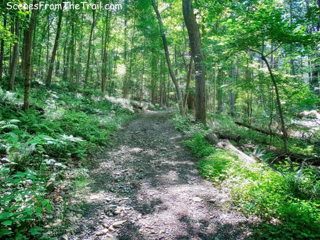 woods road