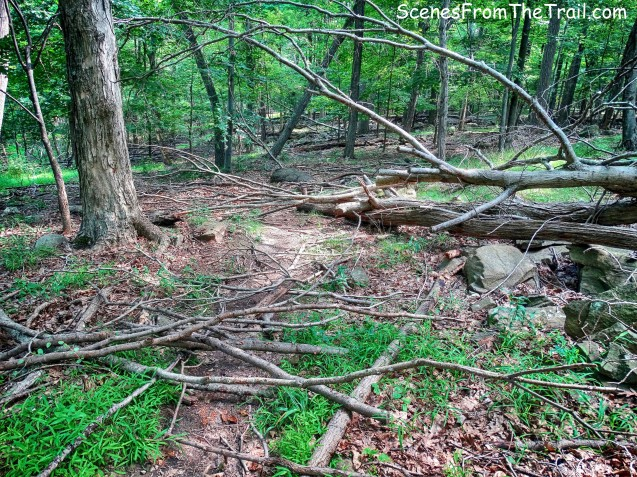 blowdown on unmarked trail
