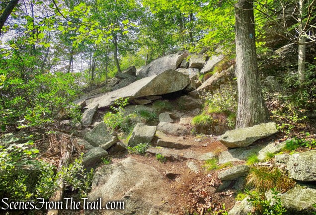 scramble - Timp-Torne Trail