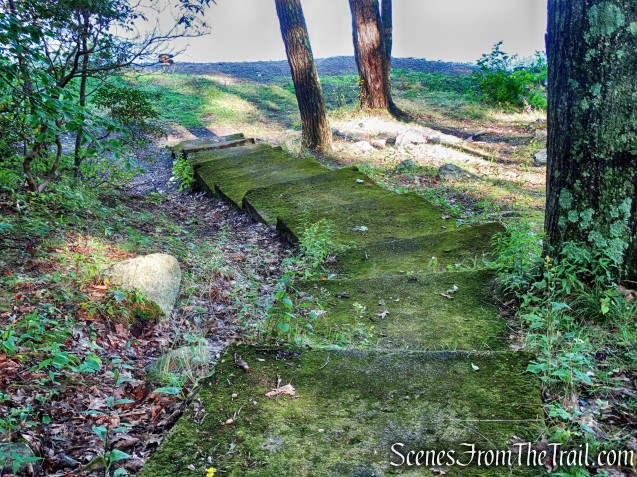 moss lined concrete steps
