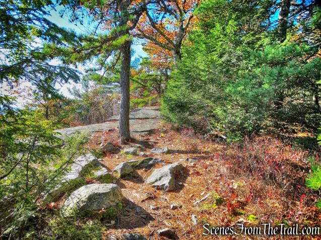 Beacon Hill Trail
