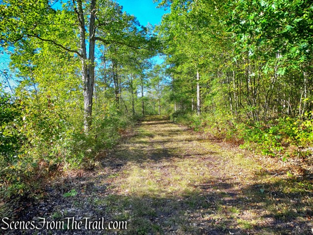 Cobey Pond Trail