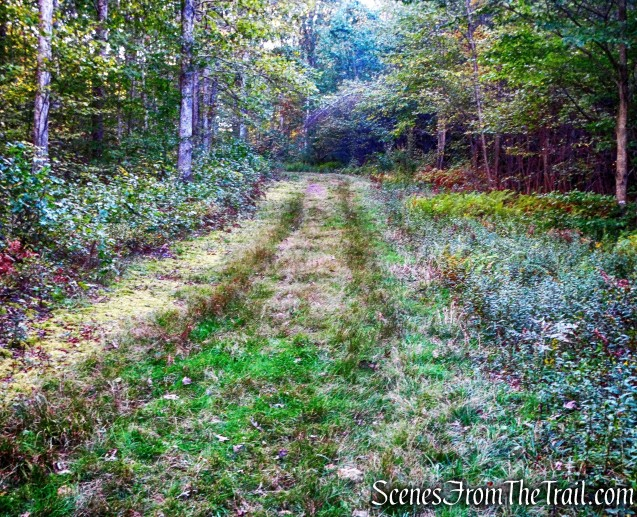 Heading south - Cobey Pond Trail