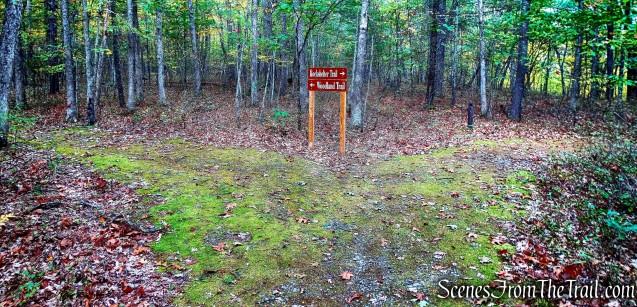 Turn right on Rockshelter Trail
