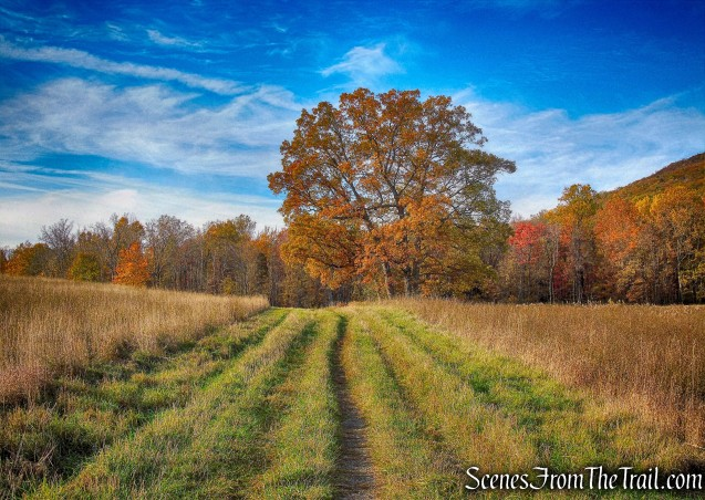 Sweet Clover Trail