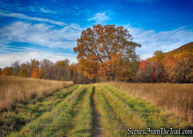 Sweet Clover Trail