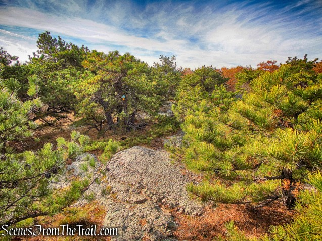 Jessup Trail