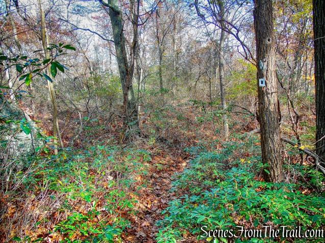 Dark Hollow Trail
