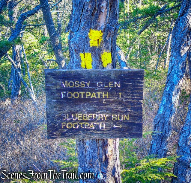 Mossy Glen and Blueberry Run junction