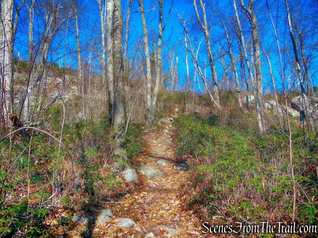 Blueberry Run Footpath