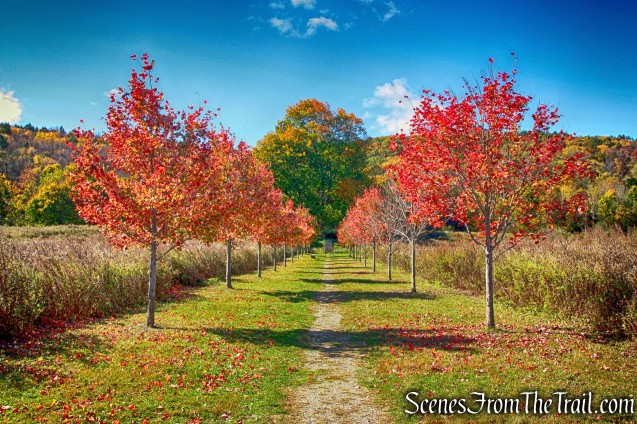 maple trees - Dover Stone Church - October 19, 2014