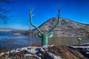 elk's head - Bear Mountain State Park