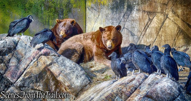 Bears - Trailside Museum and Zoo