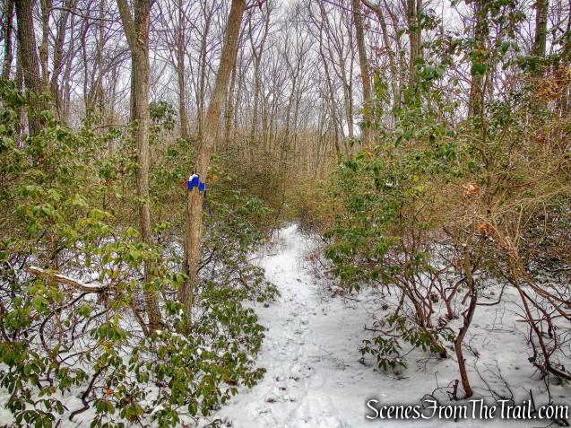 Beech Trail
