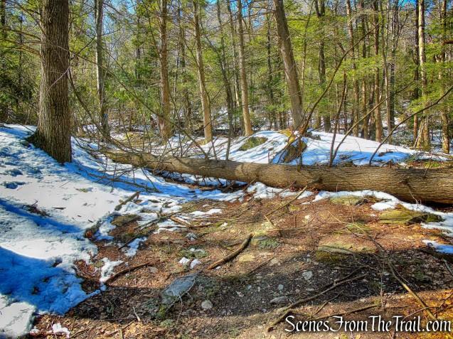 blowdown - Lookout Point Trail