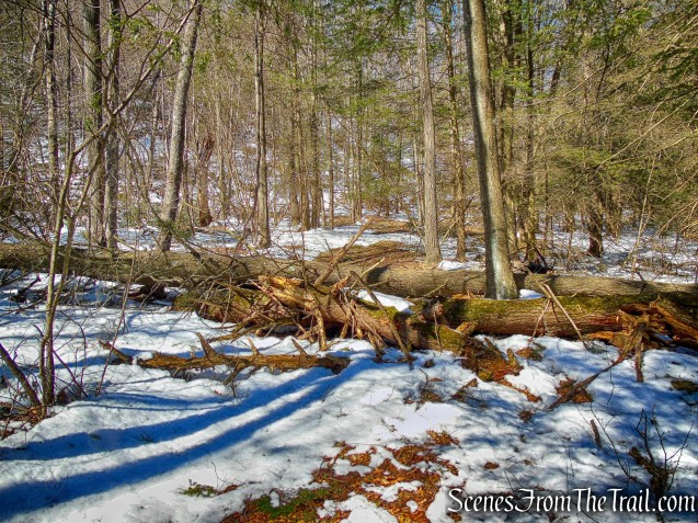 blowdowns - Lookout Point Trail